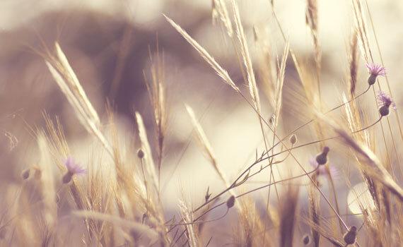 Produits bio et naturels - Patchaia